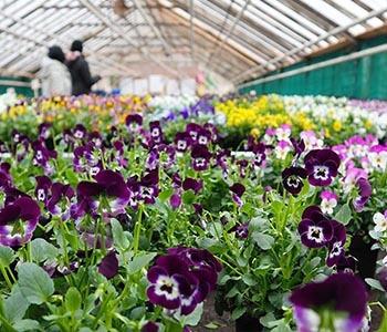 Horticultural Jobs